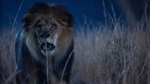 Se Zoo - premiere på TV 2 Sumo